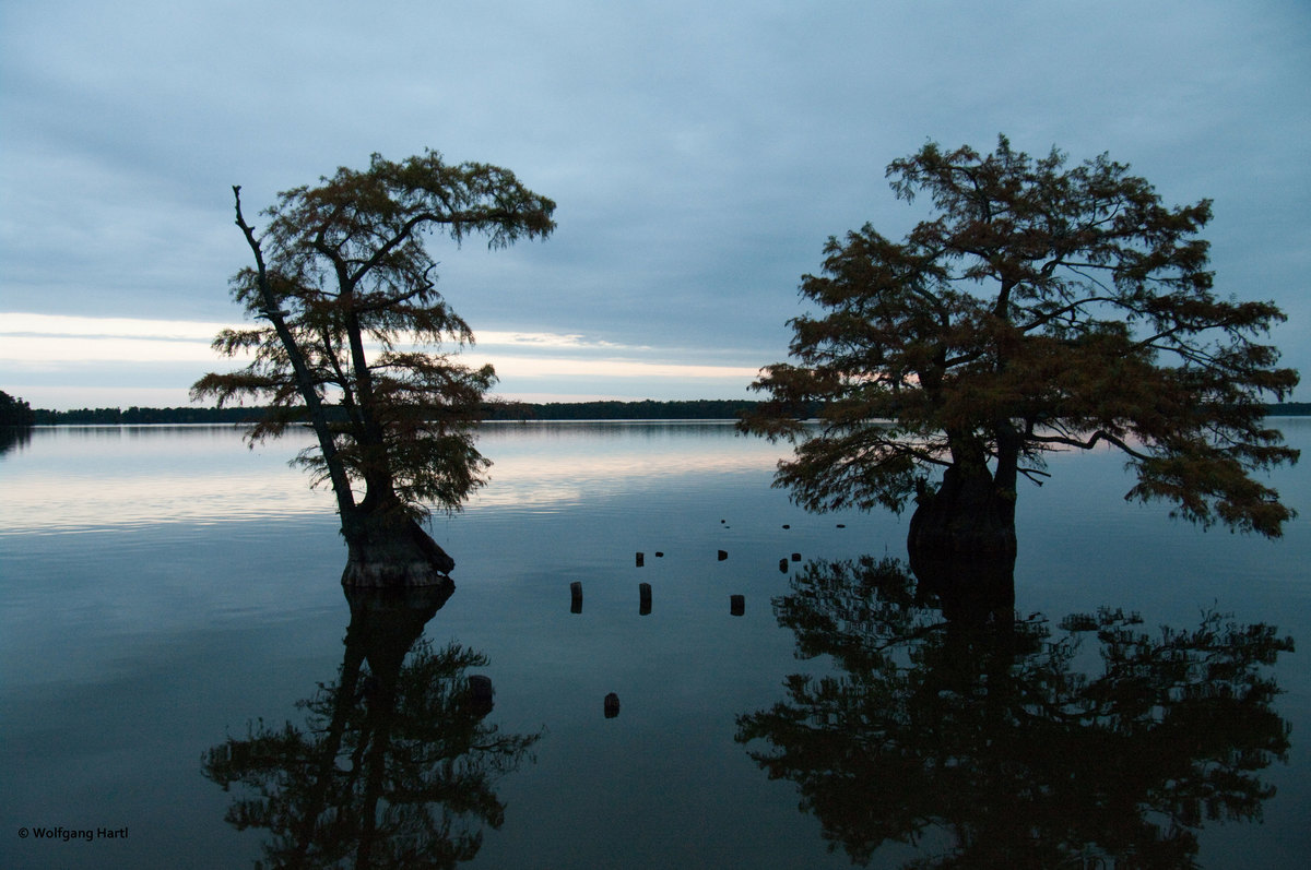 Abendstimmung am Reelfoot Lake, USA