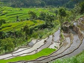 Reisterrassen in Bali