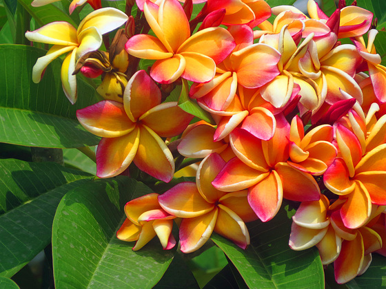 Blumen aus Thailand