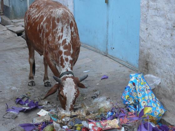 Leider auch sehr viel Schmutz und noch mehr Kühe in den Städten