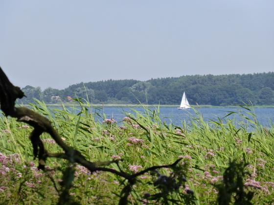 Blich von der Insel Vilm nach Rügen