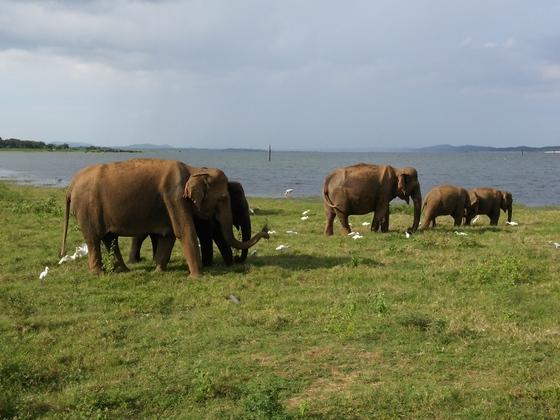 Sri Lanka Safari bei Dambulla