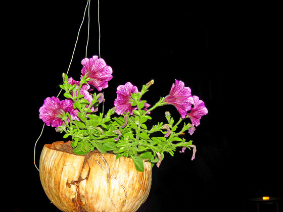 """""""Balkon"""" - Pflanzen"""
