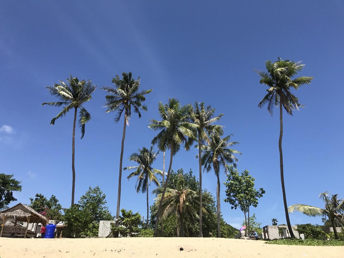 Palmen am Maenam Beach
