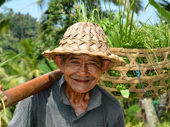 Reisbauer (Bali, Indonesien)