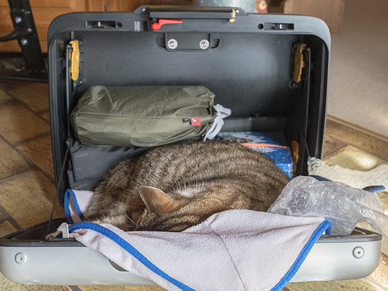 Ich packe meinen Koffer und tue hinein: