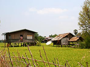 farmhouse in ricefield